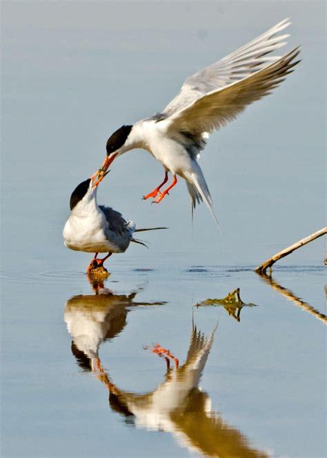 birds bear river u s fish and wildlife service
