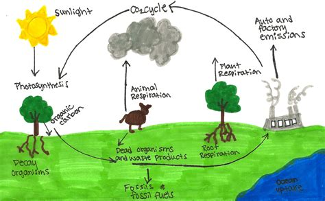 The Carbon Cycle And Climate Models