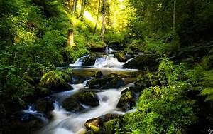 Black, Forest, In, Germany, Wallpapers