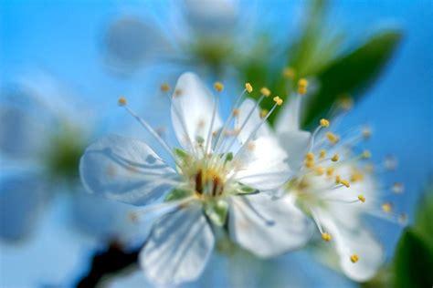 light blue blur website facebook twitter camera