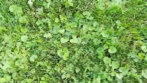 Unkraut Im Rasen Bestimmen : unkraut im rasen bestimmen was ist das f r ein unkraut youtube ~ Frokenaadalensverden.com Haus und Dekorationen