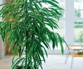 Plante D Intérieur Haute : grande plante verte pas cher plante interieur haute ~ Dode.kayakingforconservation.com Idées de Décoration