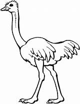 Coloring Ostrich Printable sketch template
