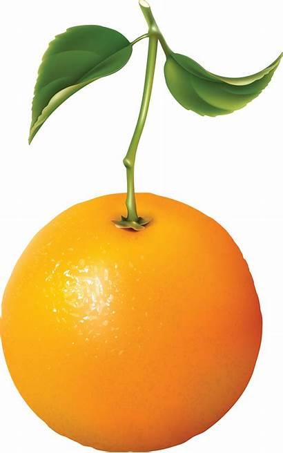 Orange Clipart Oranges Transparent Banana Fruits Webstockreview