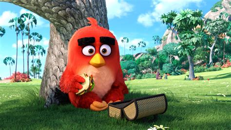 angry birds main character  resolution