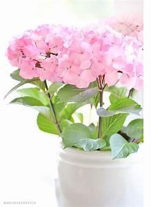 Hortensien In Heißes Wasser : ein st ckchen sommer mein ideenreich ~ Lizthompson.info Haus und Dekorationen