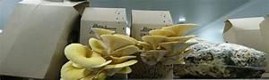 Comment Cultiver Des Champignons : cultiver ses champignons la maison build green ~ Melissatoandfro.com Idées de Décoration