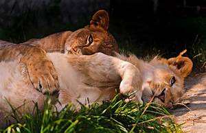 1000+ images about kočkovité šelmy - kříženci on Pinterest ...