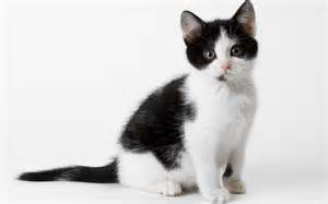 black and white cats 374380 1265677033811 full