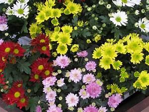 Blumen Im November : blumen derblumenblog seite 2 ~ Lizthompson.info Haus und Dekorationen