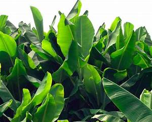 Winter-Hardy Tropical Plants DIY
