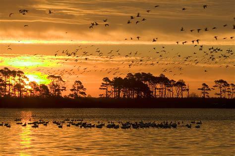 filephoto week sunrise chincoteague national wildlife
