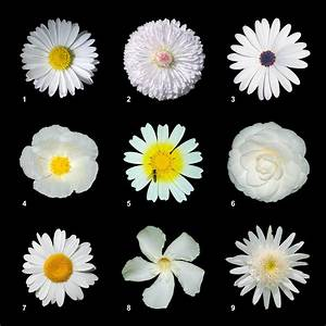 Information About Types Of White Flowers Yousensefo