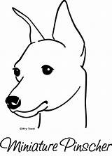 Pinscher Min Miniature Doberman Mini Pins Dog Pincher Dogs Drawings Horse Pinchers Flickr Friesian Coloring Pages Miniatures Template Tattoo Proud sketch template