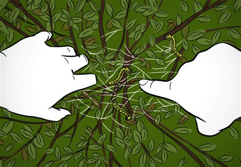 Raupen Buchsbaum Bekämpfung by Buchsbaumz 252 Nsler Erfolgreich Bek 228 Mpfen Ratgeber Obi