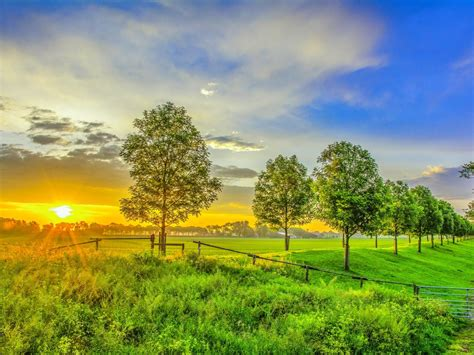nature sunrise field green grass trees sky hd wallpaper