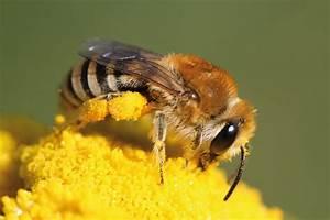 Pflanzen Gegen Wespen : warum wild bienen deutschland summt bundeswettbewerb ~ Orissabook.com Haus und Dekorationen
