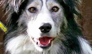 Dog News November 2014 - Justadogg