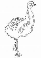 Coloring Emas Emu Desenhos Colorir Imprimir Popular Animais sketch template