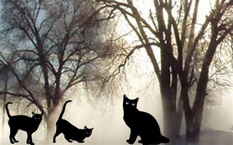 Cats Archives Halloweeneventsusa