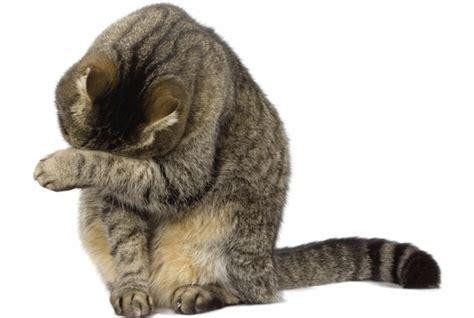 wenn katzen trauern geliebte katze magazin