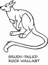 Wallaby Coloring Colouring Animal Template Sketch Animals Designlooter Sheet 680px 59kb sketch template