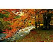 HD Forest Creek In Autumn Wallpaper  Download Free 60009