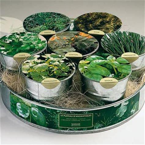 plante aromatique cuisine astuces de cuisine et herbes aromatiques paperblog
