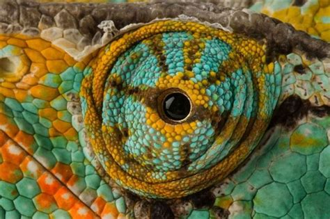 macro photography  animal eyes