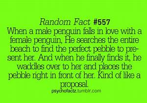 I absolutely love penguins....and now here is another ...