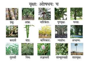 image gallery names of trees