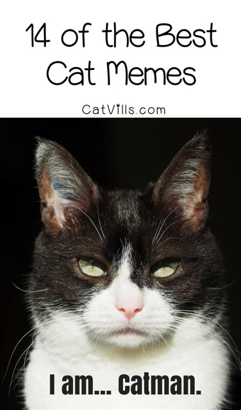 Best Cat Memes - 14 of the best cat memes that have us laughing out loud catvills