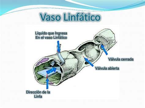 vasi linfatici sistema linfatico