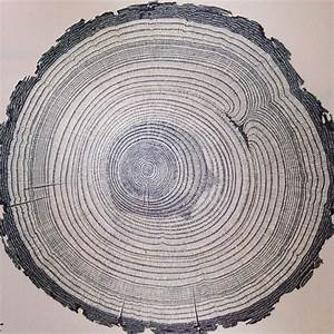 U201ccross Section Of A Ponderosa Pine From An Old National