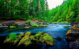 Green, Pine, Forest, River, Rock, Beautiful, Nature, Hd, Wallpaper, Wallpapers13, Com