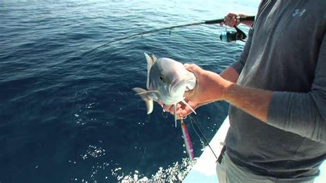 grouper bait goliath catching