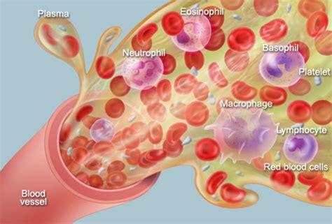 human anatomy blood cells plasma circulation