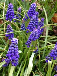 Best 25 ideas about lists of springs flower name find what youll purple spring flowers names mightylinksfo