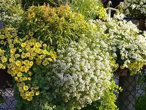 Balkon Ideen Pflanzen : ideen f r ihre balkon gestaltung in cremegelb ~ Orissabook.com Haus und Dekorationen