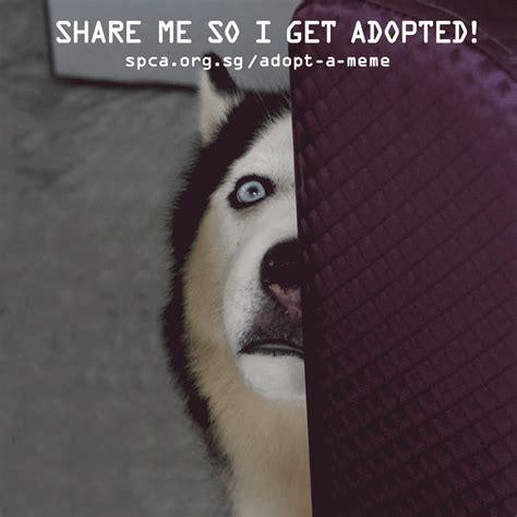 Gif Meme Creative Adoption Caign Adopt A Meme Is Using Real