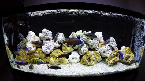 Aquascaping Cichlid Aquarium by Cichlids Aquascaping 4k