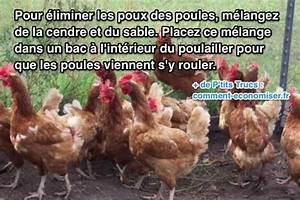 Comment Enlever Les Oeufs De Puces Sur Un Chat : comment eliminer les poux des poules courroie de transport ~ Dode.kayakingforconservation.com Idées de Décoration