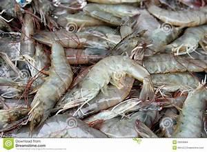 Fresh Shrimp Stock Images - Image: 26059984