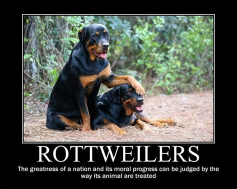 funny rottweiler quotes  pictures rottweiler