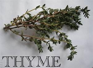Thyme   ImaKalya.com