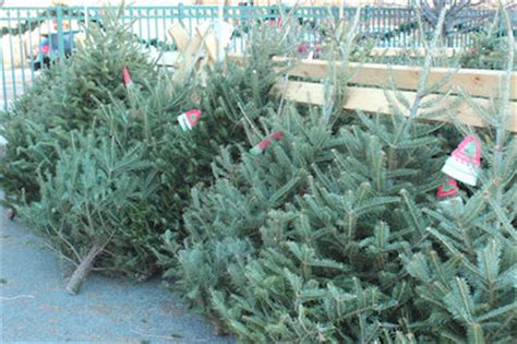 chicago christmas tree lot trees in lincoln square where to get em how to em lincoln square chicago