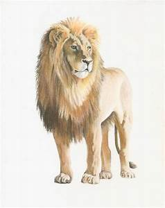 Lion drawing original - pastel pencil - 8 x 10 inches ...