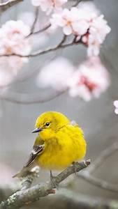 Wallpaper Pine Warbler, bird, yellow, 4K, Animals #19446  Bird