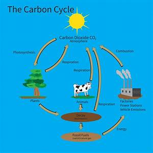 Rhs Level 3 Question  U2013 Carbon Cycle