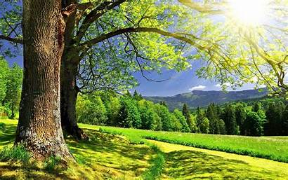 Sunny Background Wallpapers Nature Baltana